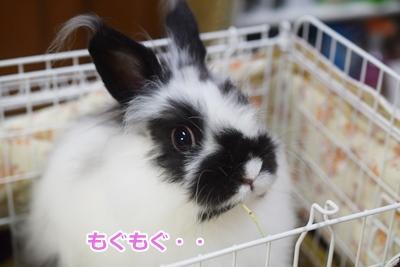 DSC_071620150707zenjiro