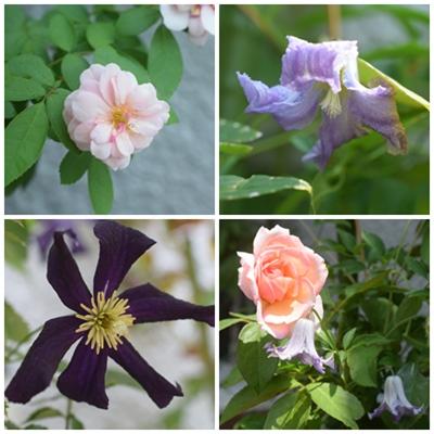 flower20150802