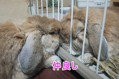 DSC_032820150911kiyoshiandtakeshi