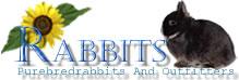 RABBITS ラビッツ | うさぎ専門店ブリーダー大阪